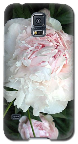 Galaxy S5 Case featuring the photograph Springs Peony by Carol Sweetwood