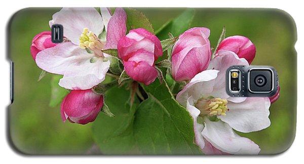 Springtime Apple Blossom Galaxy S5 Case by Gill Billington