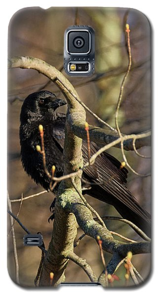 Galaxy S5 Case featuring the photograph Springtime Crow by Bill Wakeley