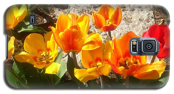 Springtime Flowers Galaxy S5 Case