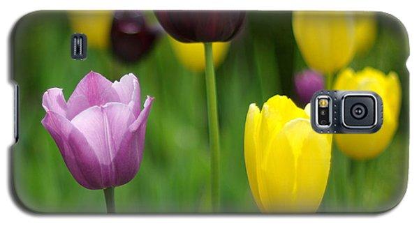 Springtime Glory Galaxy S5 Case by Linda Mishler