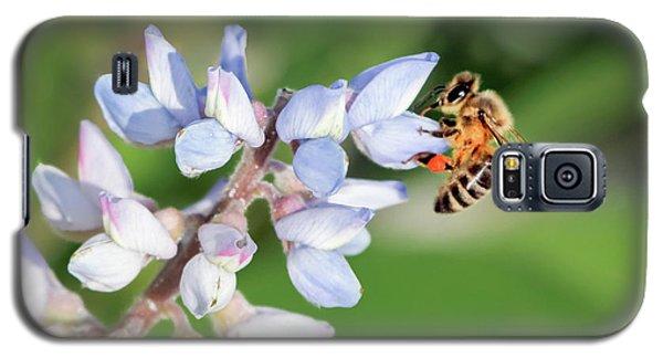 Springtime I Galaxy S5 Case by Dawn Currie