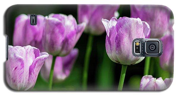 Springtime In Stratford Galaxy S5 Case
