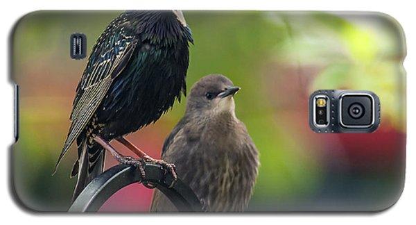 Squawker Galaxy S5 Case