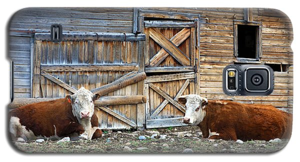 Squires Herefords By The Rustic Barn Galaxy S5 Case by Karon Melillo DeVega
