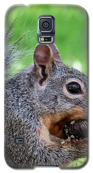 Squirrel 1 Galaxy S5 Case