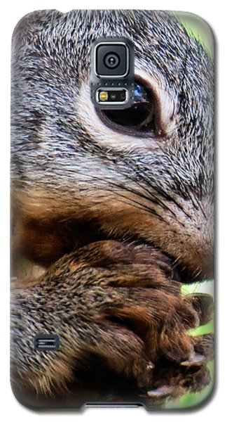 Squirrel 3 Galaxy S5 Case