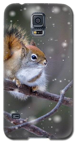 Squirrel Balancing Act Galaxy S5 Case by Patti Deters
