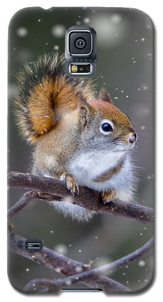 Squirrel Balancing Act Galaxy S5 Case