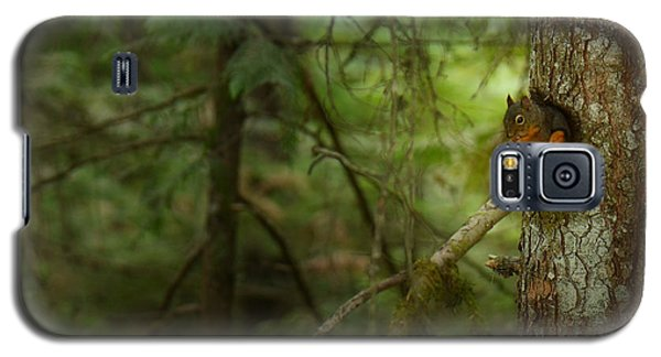 Galaxy S5 Case featuring the photograph Squirrel Breaks The Silence by Lisa Knechtel