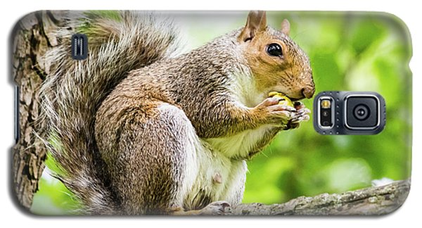 Squirrel Eating On A Branch Galaxy S5 Case