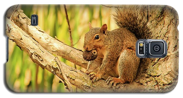 Squirrel In A Tree In The Marsh Galaxy S5 Case