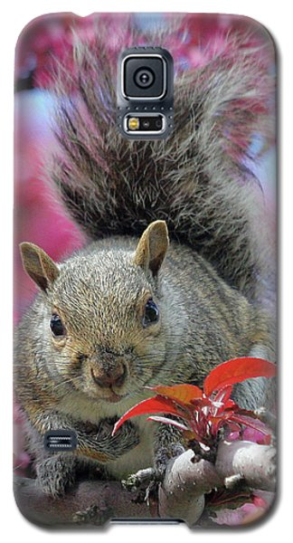 Galaxy S5 Case featuring the photograph Squirrel In Apple Blossoms by Doris Potter