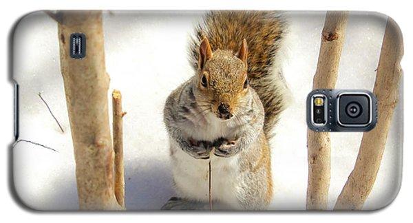 Squirrel In Snow Galaxy S5 Case