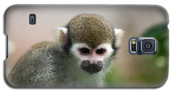 Squirrel Monkey Galaxy S5 Case by Amanda Elwell