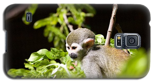 Squirrel Monkey Youngster Galaxy S5 Case by Afrodita Ellerman