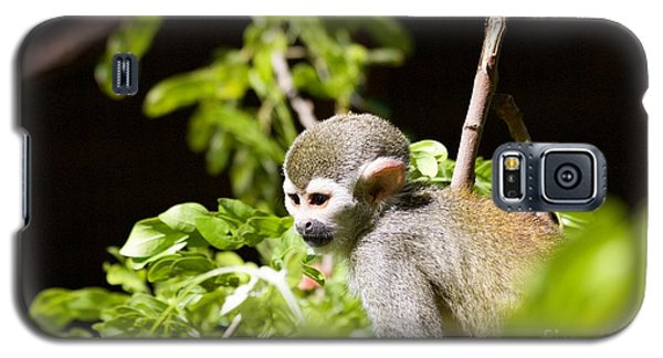 Squirrel Monkey Youngster Galaxy S5 Case