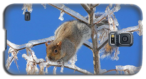 Galaxy S5 Case featuring the photograph Squirrel On Icy Branches by Doris Potter