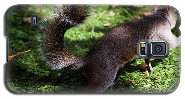Squirrel Running Galaxy S5 Case