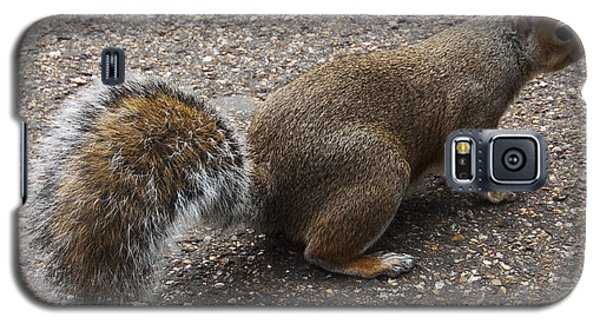 Squirrel Side Galaxy S5 Case