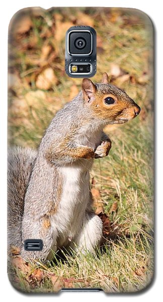 Galaxy S5 Case featuring the photograph Squirrely Me by Debbie Stahre