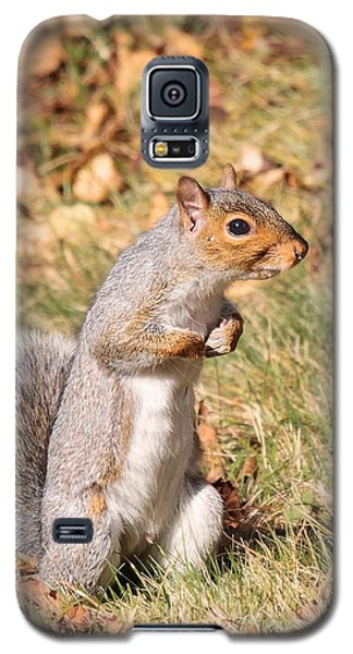 Squirrely Me Galaxy S5 Case by Debbie Stahre