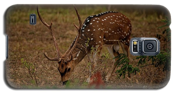 Sri Lankan Axis Deer Galaxy S5 Case