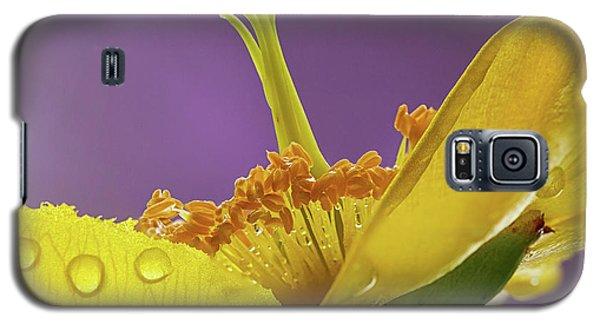 St Johns Wort Flower Galaxy S5 Case