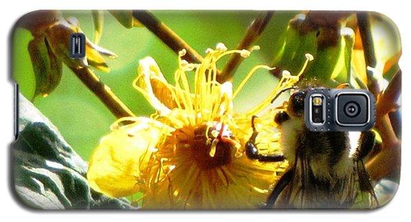 St. John's Wort Galaxy S5 Case by Melissa Stoudt