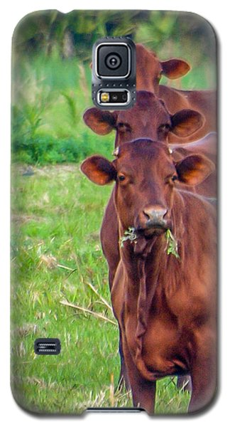 Stacked Up Cows          Galaxy S5 Case