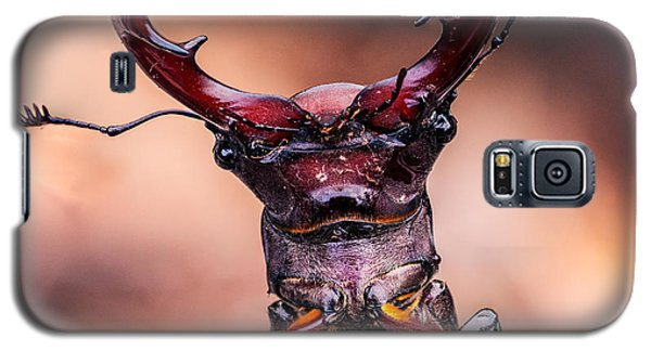 Stag Beetle Stare Down Galaxy S5 Case