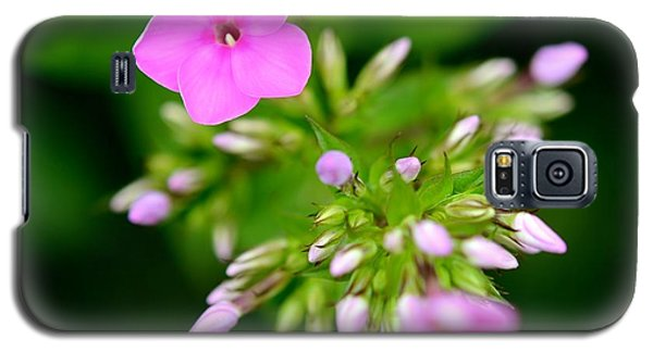 Galaxy S5 Case featuring the photograph Stages Of Spring by Corinne Rhode