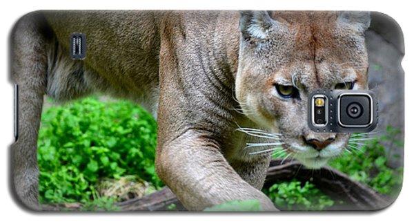 Stalking Galaxy S5 Case