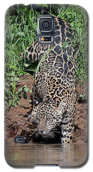 Galaxy S5 Case featuring the photograph Stalking Jaguar by Wade Aiken