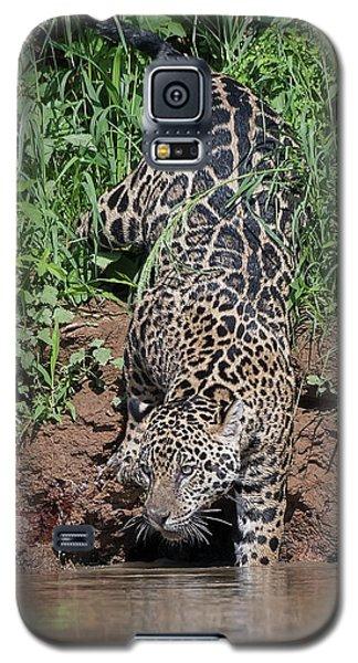 Stalking Jaguar Galaxy S5 Case by Wade Aiken