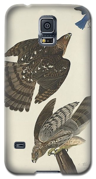 Stanley Hawk Galaxy S5 Case by Dreyer Wildlife Print Collections