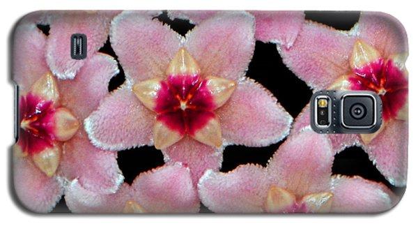 Stapelia Hirsuta - Starfish Flower 002 Galaxy S5 Case by George Bostian