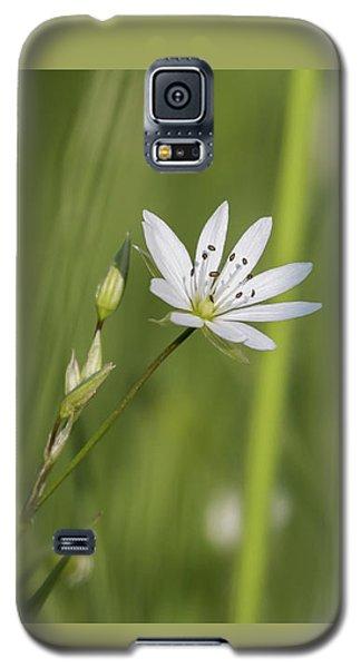 Star Galaxy S5 Case