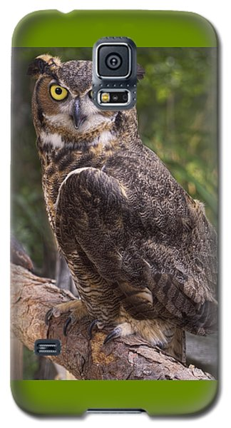 Stare Me Down Baby Galaxy S5 Case
