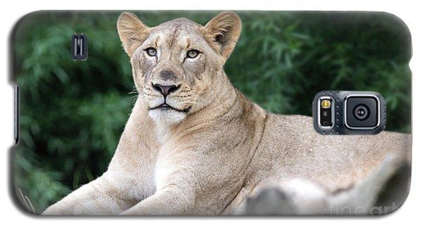 Staring Galaxy S5 Case
