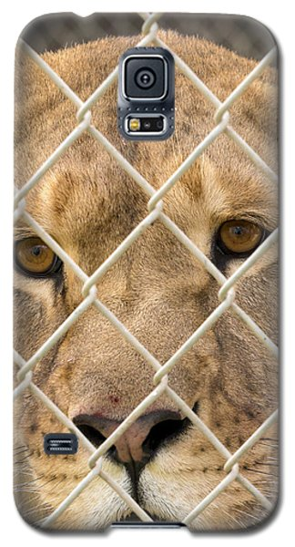 Staring Lioness Galaxy S5 Case