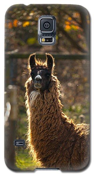 Staring Llama Galaxy S5 Case
