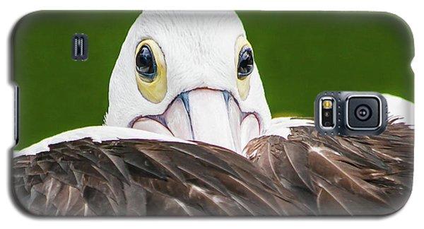 Staring Pelican Galaxy S5 Case