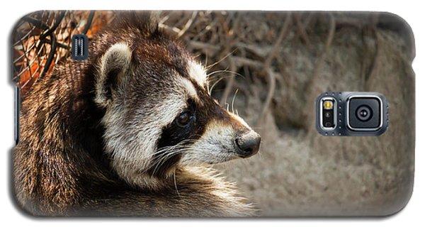 Staring Raccooon Galaxy S5 Case