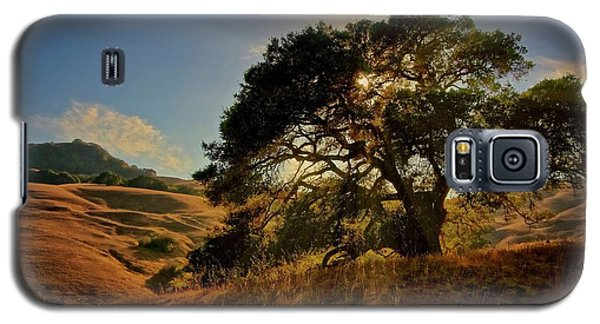 Starlight, California Oak Galaxy S5 Case