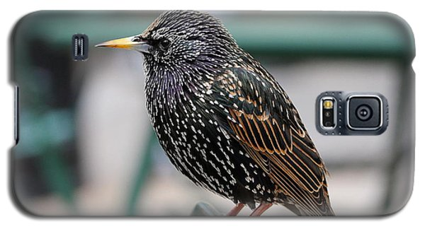 Starling Galaxy S5 Case