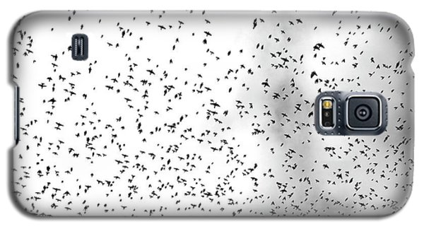 Galaxy S5 Case featuring the photograph Starlings by Colleen Williams