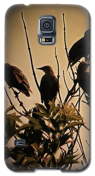 Starlings Galaxy S5 Case by Sharon Lisa Clarke