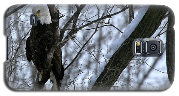 Galaxy S5 Case featuring the photograph Starved Rock Eagle by Paula Guttilla