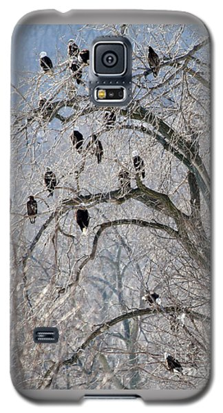 Starved Rock Eagles Galaxy S5 Case by Paula Guttilla